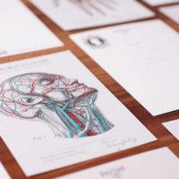 TWY180115-16_科學明信片 - 人體解剖圖 Science Postcard - Anatomy Image (2)